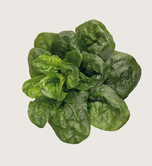 spinaci foglie cubetti